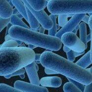 15 juin – Bactérie